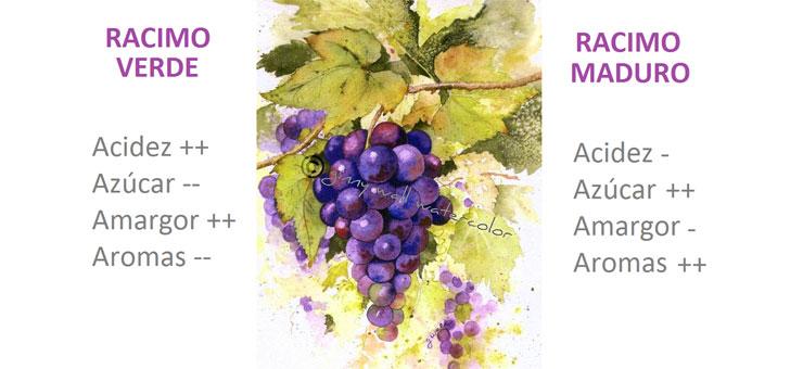 Madurez uva