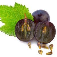 Maduración de la uva
