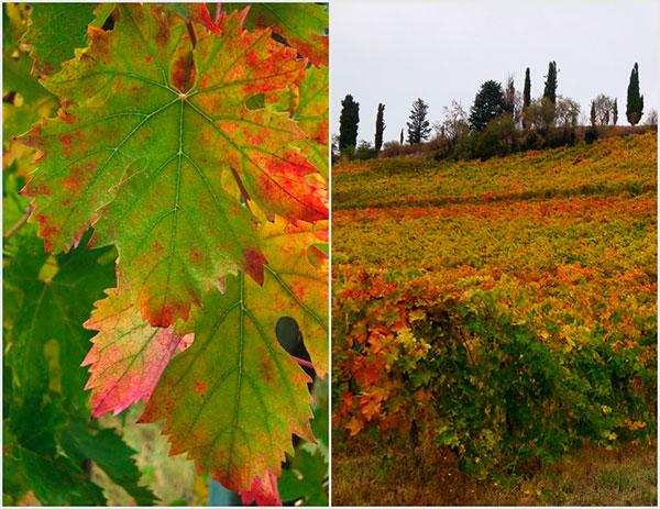Hojas en otoño