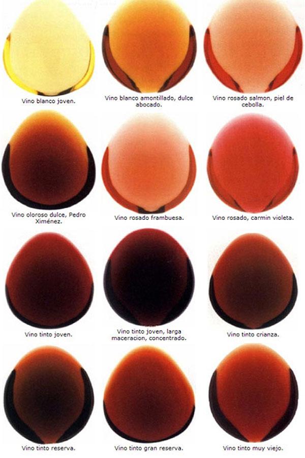 Cata visual del vino 5